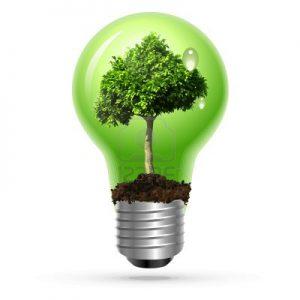 arbre-vert-dans-la-lampe-sur-isole